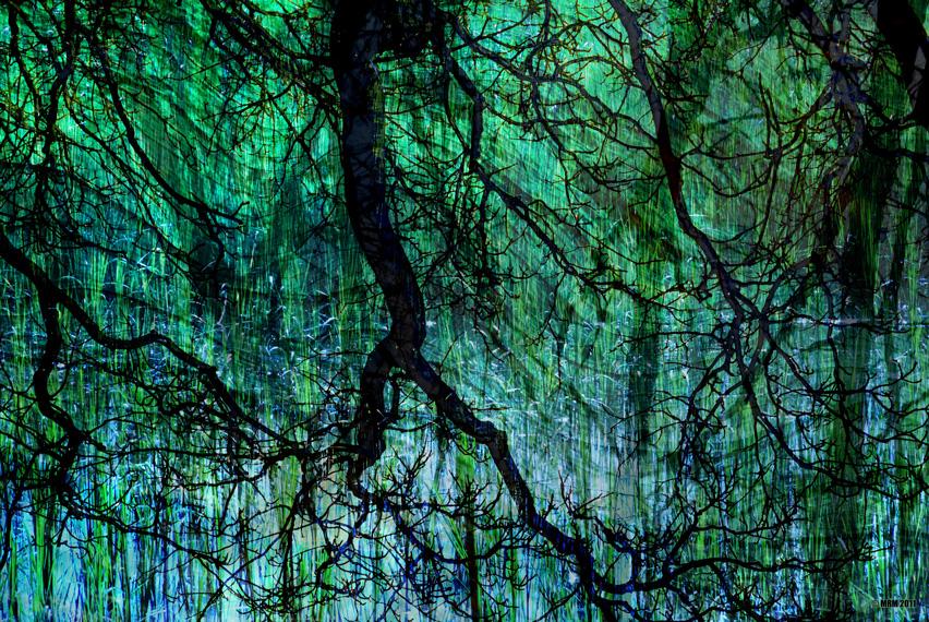 Treeland Substrate, 2011.