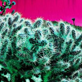 Photo: Cacti Bubble