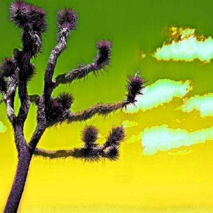 Photo: Yucca Melt