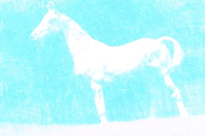 Horseplay (3)